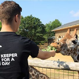 Keeper for a Day at ZSL London Zoo